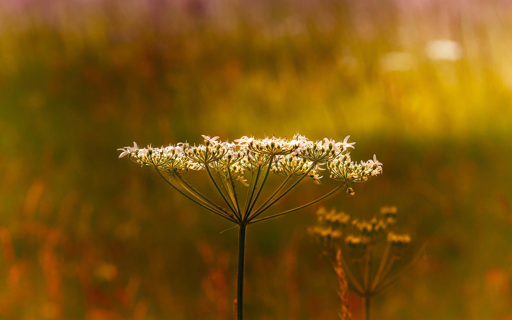 Dr-Matthias-Frank_Hausarzt_Home_cow-parsley-3999570_1920.jpg